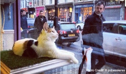 Cat Cafe London