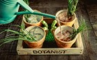 The Botanist - Cocktail Bar Review