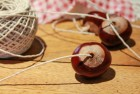 Candlemaker Annual Conker Championships