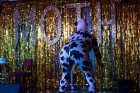 Hooray Cabaret Animal Farm - London Event Review
