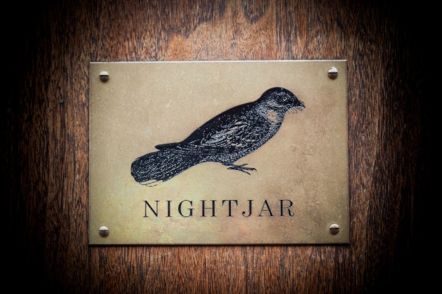 Nightjar photo