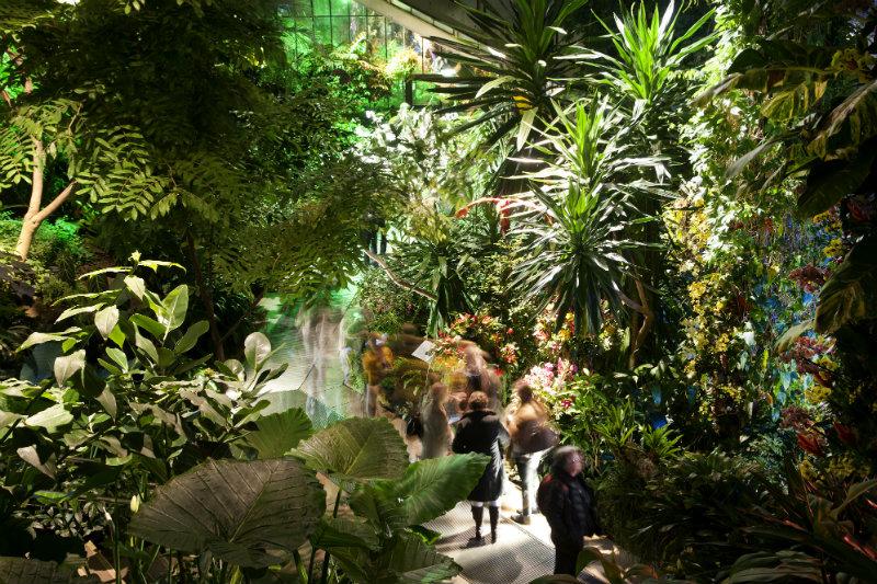 Orchids Lates Royal Botanic Gardens Kew London
