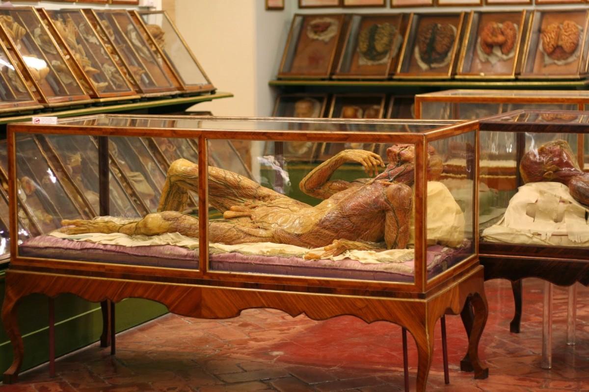 The 19th Century Anatomy Museum With Verity Darke London Pop Up