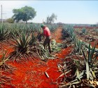 """The future of Mezcal"": a panel discussion with blind Mezcal tasting"