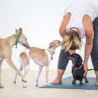 DOGA (YOGA WITH DOGS )