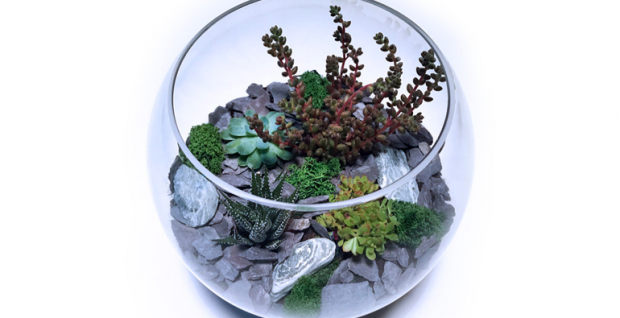 Terrarium Workshop at Neal's Nurseries Garden Centre