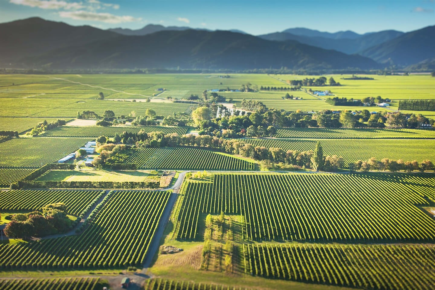 SIP IT: A taste of Spring from New Zealand's Kim Crawford