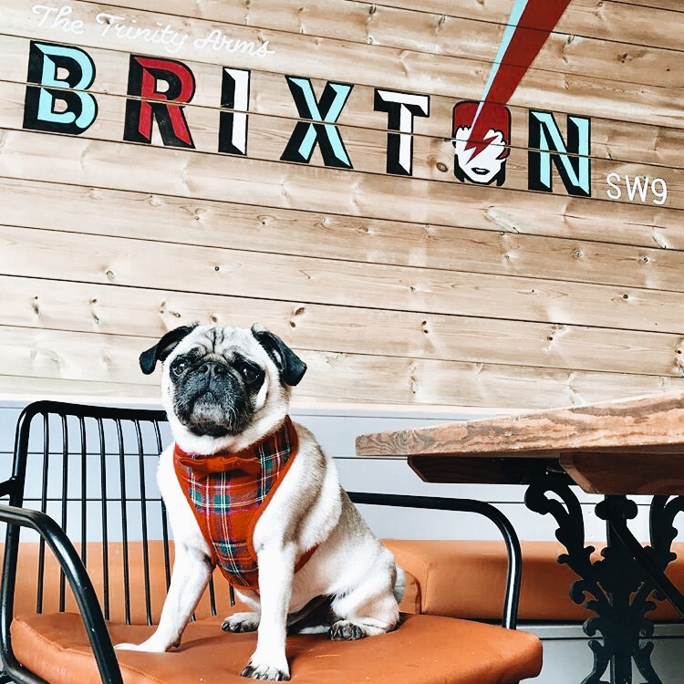Trinity Pup Brunch in support of Battersea Cats and Dogs Home
