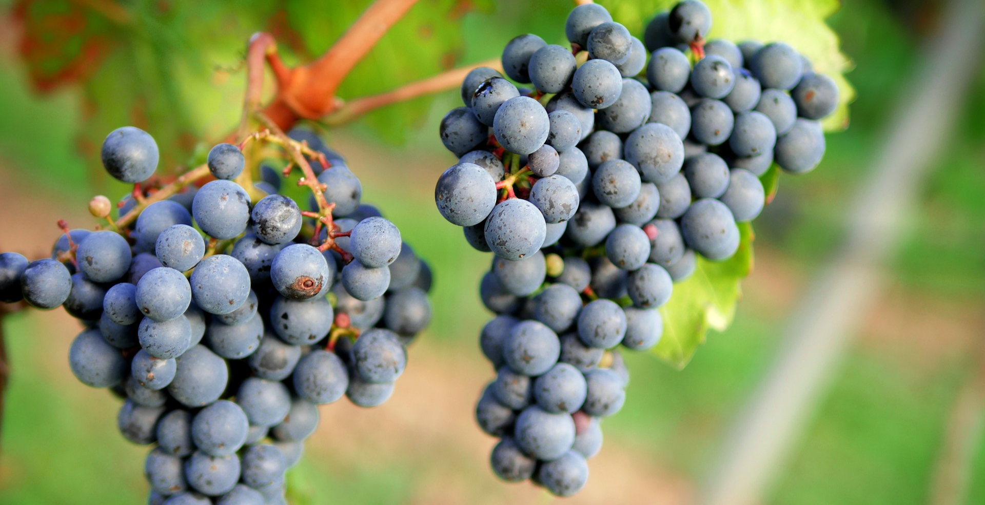 Wine Tasting: Forgotten Grapes of the World