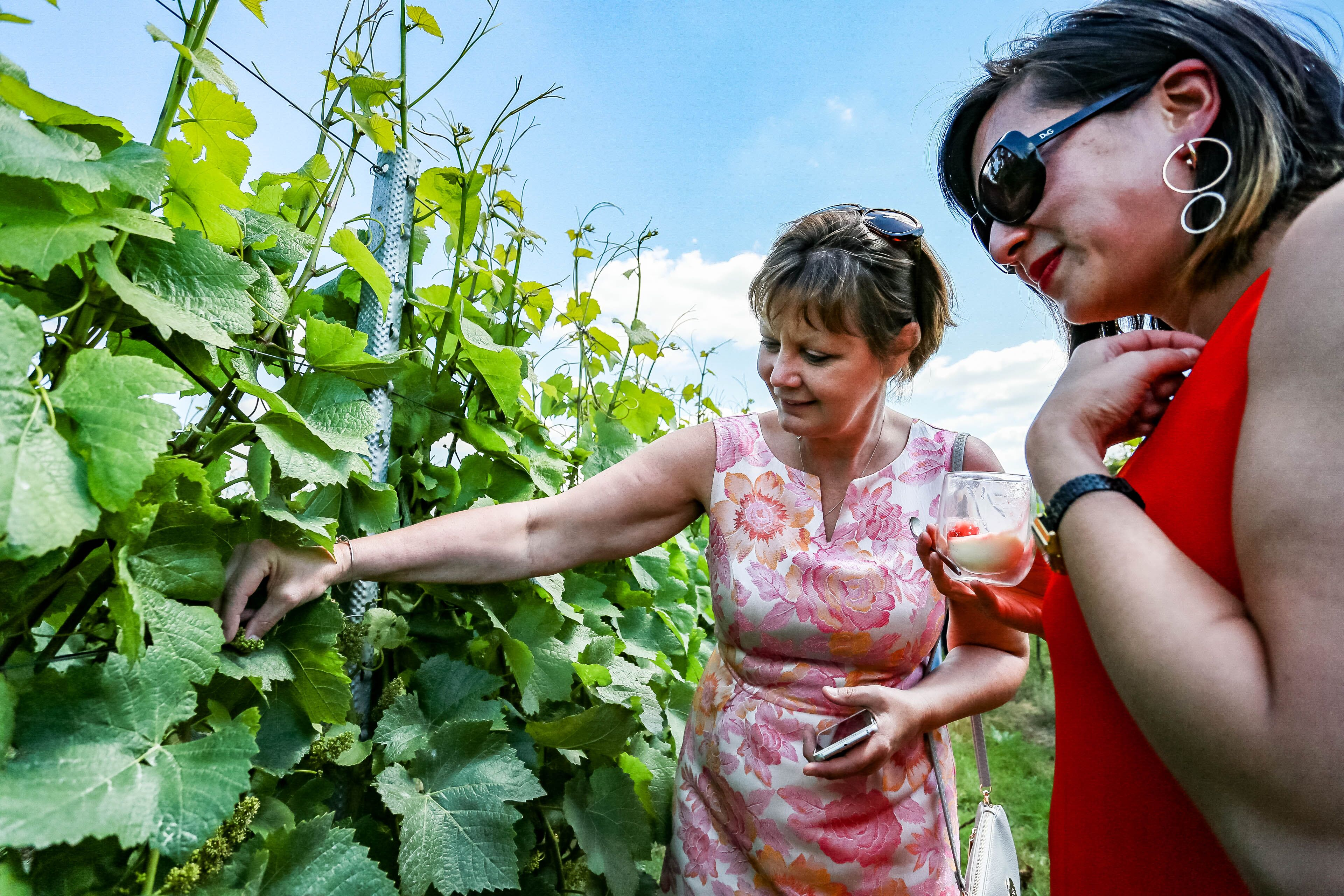 Guided Vineyard Tour and Squerryes Wine Tasting