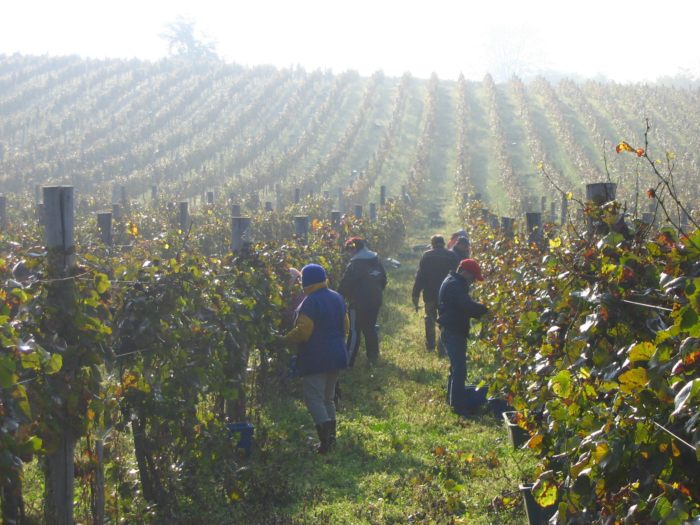 Bedales' WINE EXPLORER Series