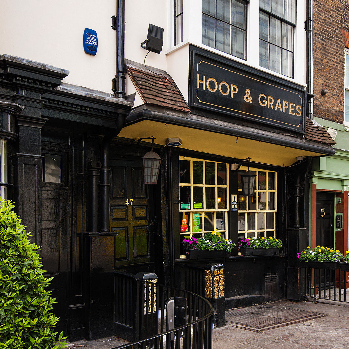 The Hoop and Grapes