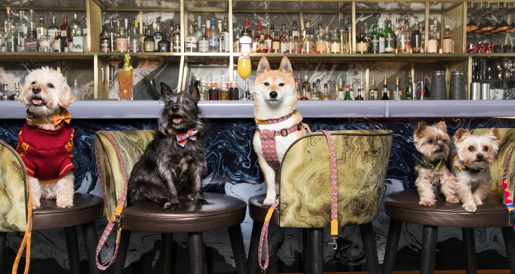 Bottomless Dog Brunch | London Dog-Friendly Brunch |  DesignMyNight