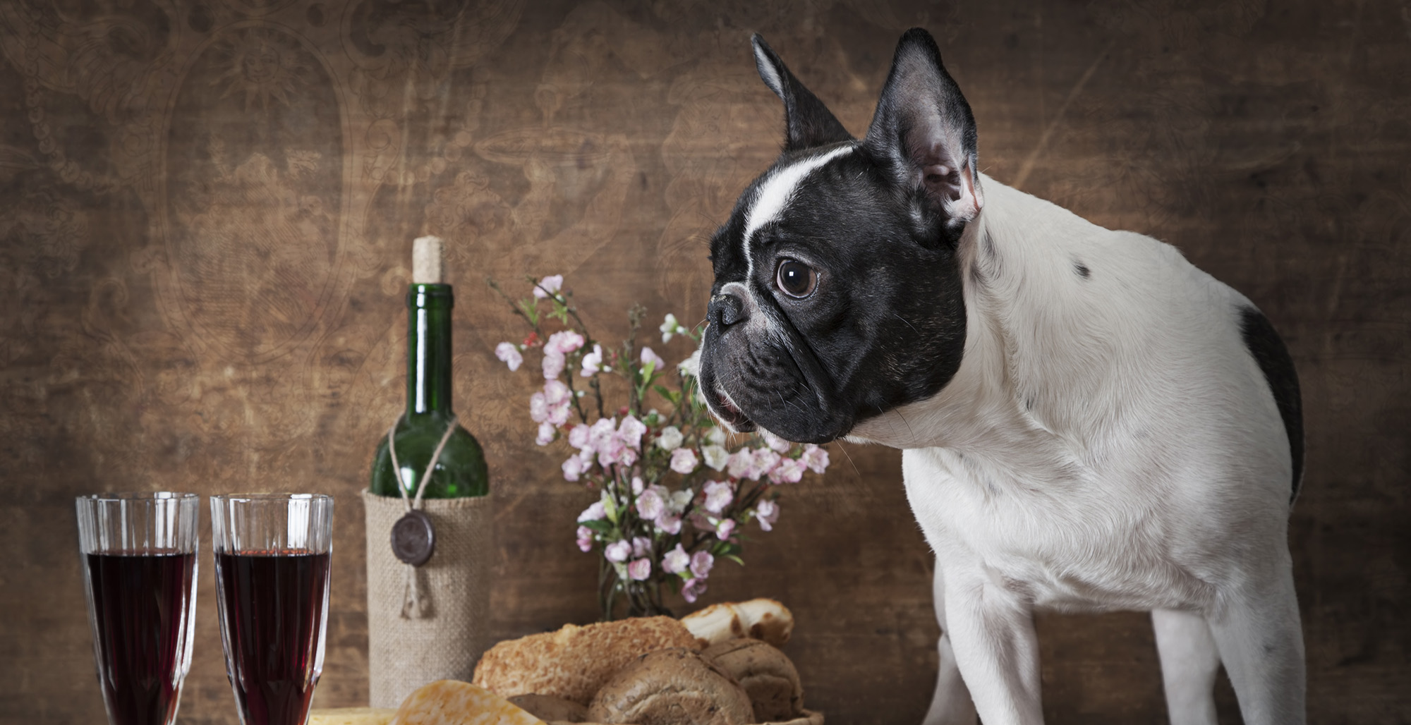 Wine and Canine, a dog-friendly wine tasting