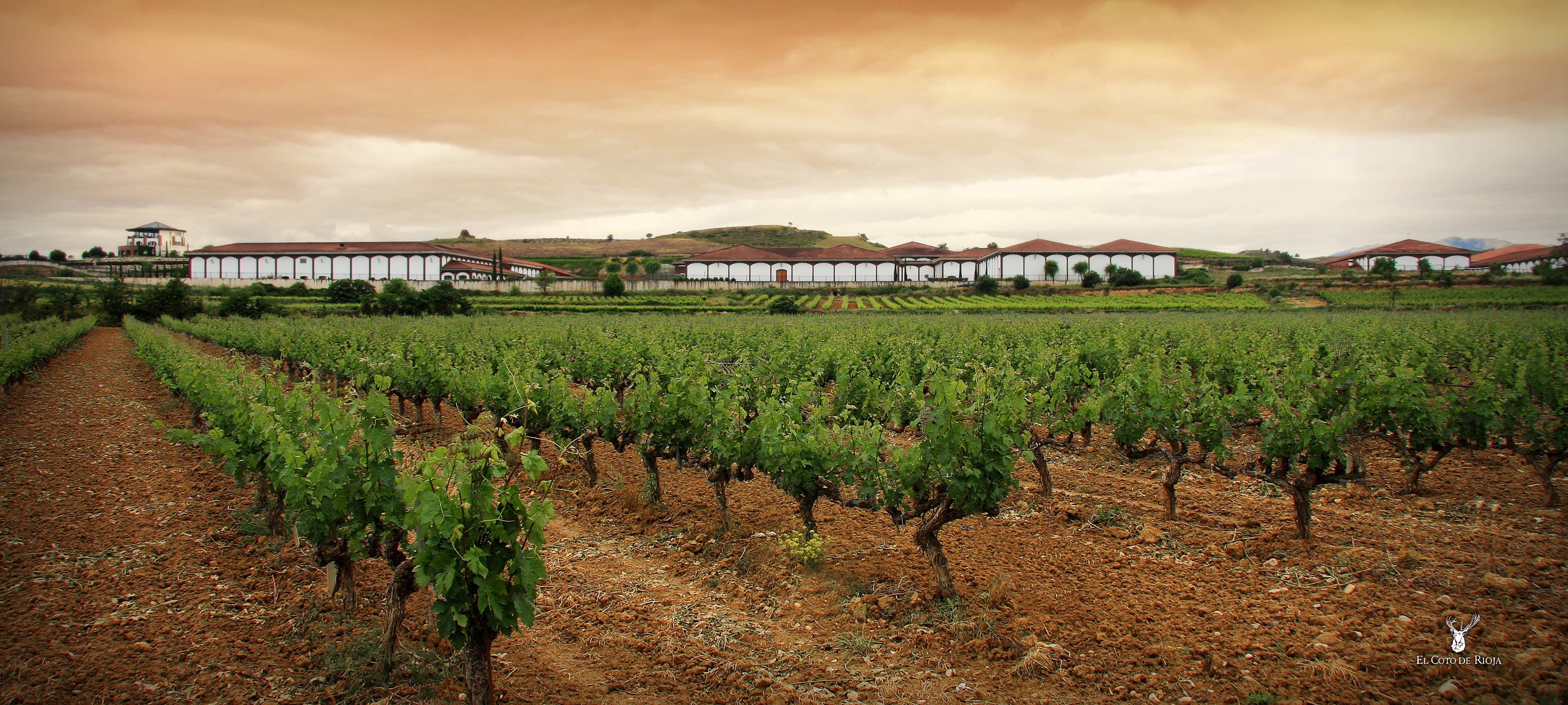Taste of Rioja | Wine Masterclass with Inigo | Monday 2nd September