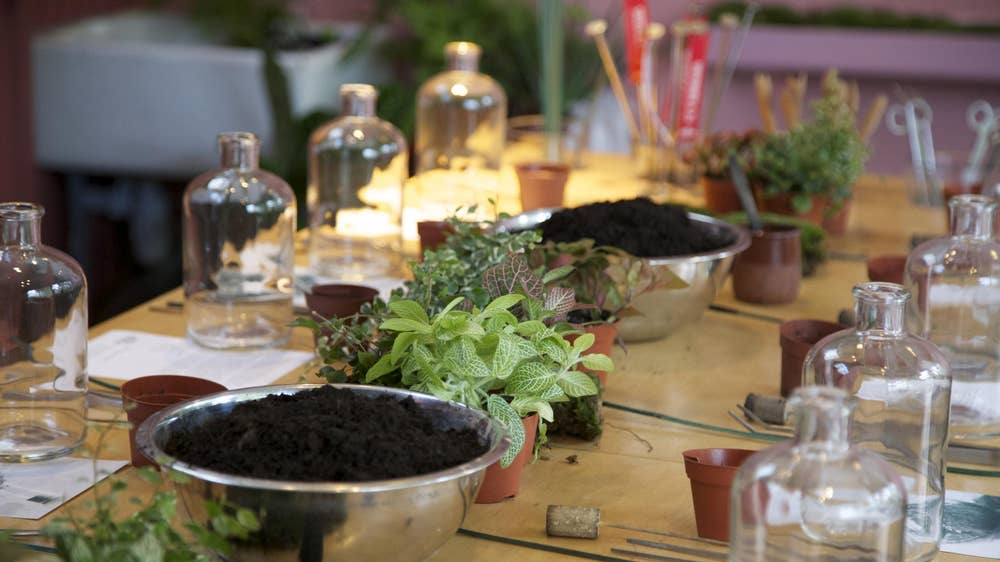 CHRISTMAS CRAFTERNOON: TERRARIUM WORKSHOP WITH HACKNEY ARTS