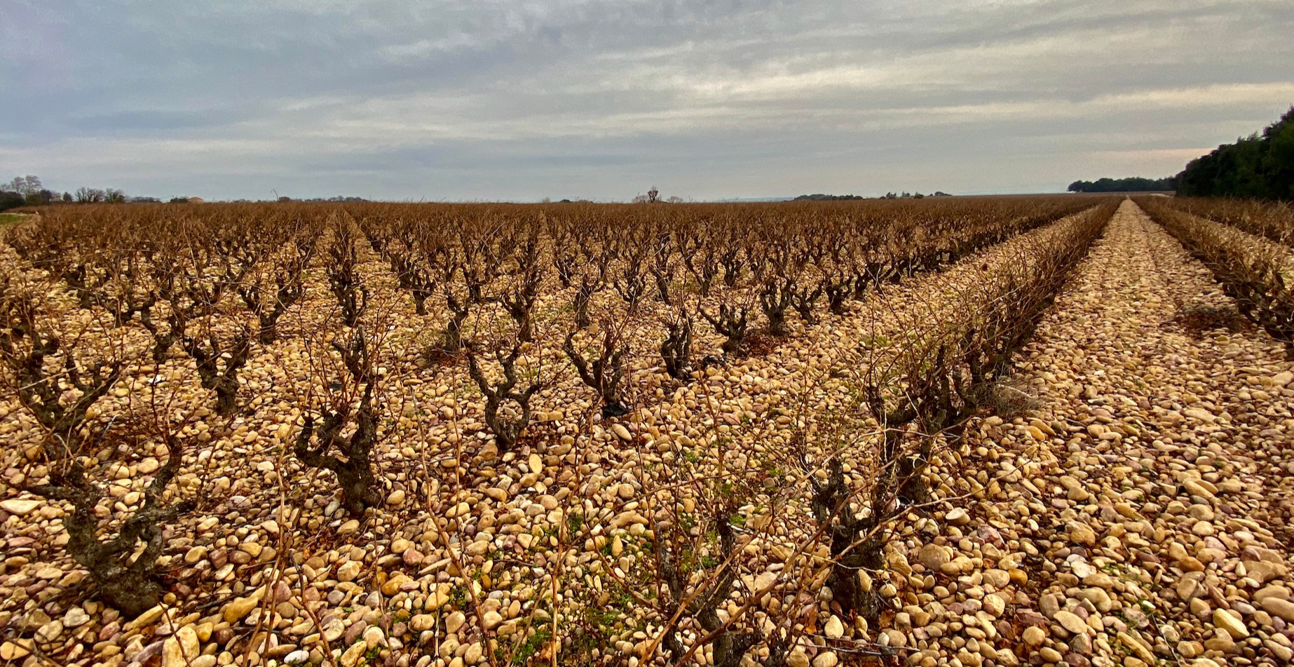 RHONE REDS: A Premium Wine Workshop