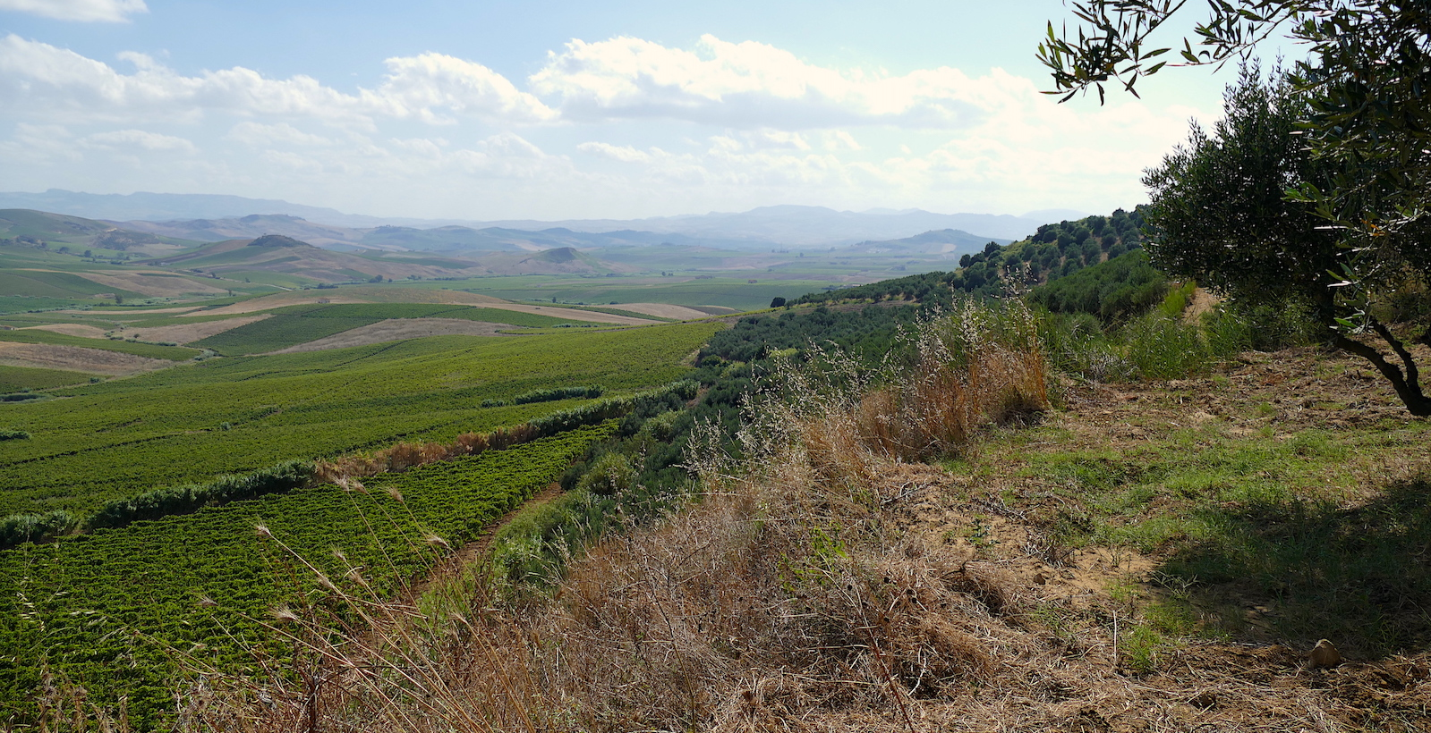 Wine Workshop: Southern Italy