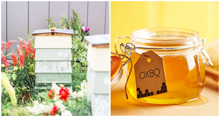 Oxbo bees