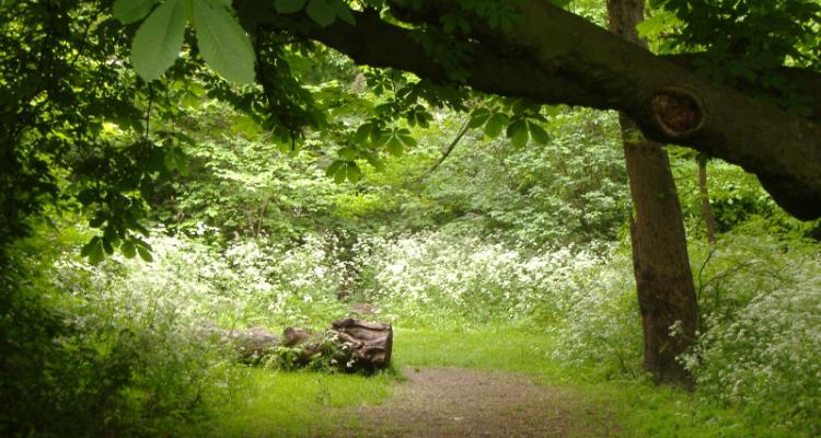 Woodland walks London Barnsbury Wood Islington
