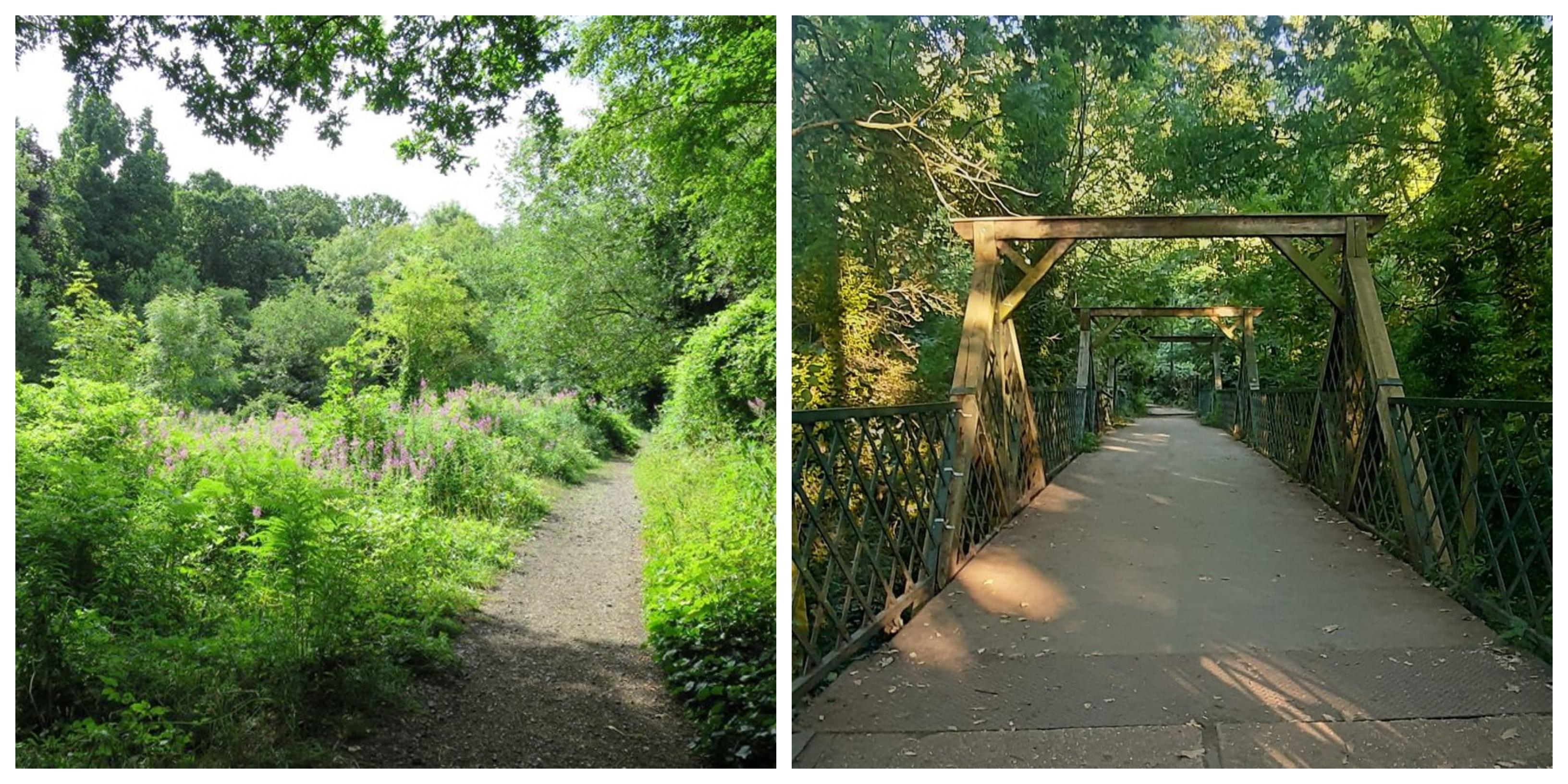 Woodland walks London Sydenham Hill Wood