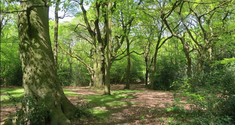 woodland walks London Oxleas wood