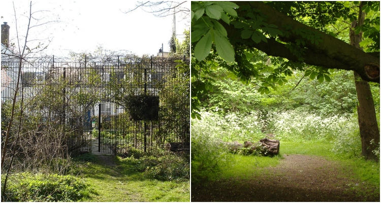 Barnsbury Woods | Secret Walks In London | DesignMyNight