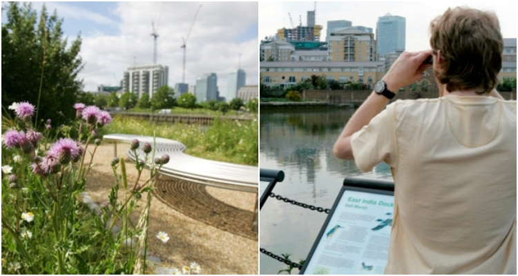 Bow Creek and East India Basin | Secret Walks In London | DesignMyNight