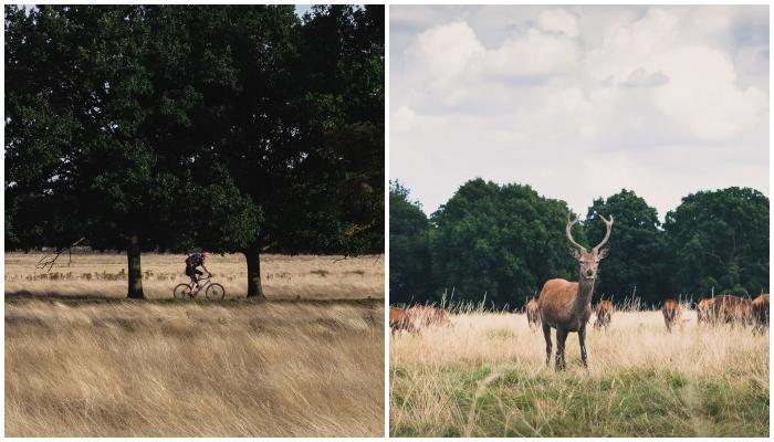 Richmond Park Cycle Routes