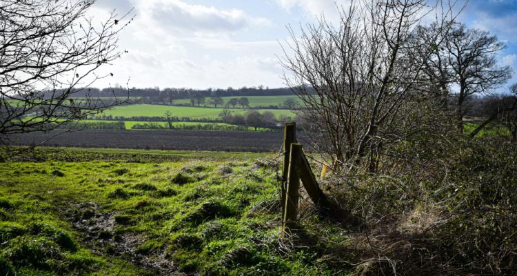 South Downs walks near Brighton