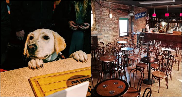 Sunflower Public House | Dog-Friendly Places Belfast | DesignMyNight