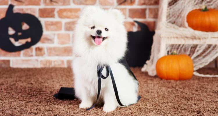 Howl-O-Ween Pup Brunch | The Perky Nel | DesignMyNight