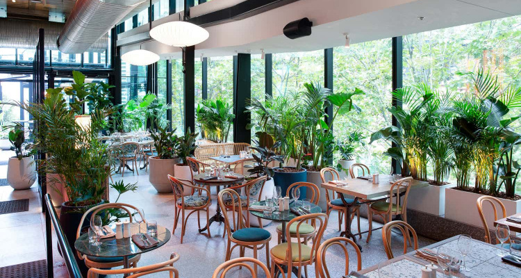 Green Moustache Restaurant Taking Bookings Sydney   DesignMyNight